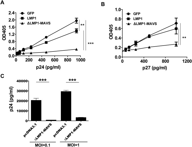 Inhibition of HIV and SIV viral infection of TZM-bl and primary human CD4+ T cells. The relative level of viral replication in TZM-bl cells was measured following incubation with supernatant from 293T cells transfected with pcDNA3.1 vector expressing GFP (control), LMP1, or ΔLMP1-MAVS plasmid. (A) Infection with HIV-1 BaL strain. (B) Infection with VSV-G pseudotyped single cycle SIV. (C) CD4+ T cells were isolated from a healthy donor by negative selection, activated, and cultured with 293T supernatant for 24 hours. Cells were then washed and infected with HIV-1 BaL at an MOI or 0.1 or 1. The concentration of p24 was measured 6 days later by ELISA assay. *p