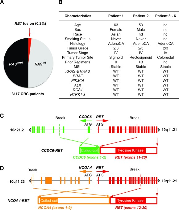 Characterization of RET fusions in CRC patients A. Frequency of RET fusions in unselected metastatic CRC patients as detected by <t>NGS.</t> B. Genetic and clinicopathologic characteristics of 6 patients harboring RET fusion kinase. nd = no data and WT = wild type. C. Fusion of CCDC6 exon 11 (green) containing the coiled-coil domain to RET exon 11 (red) containing the tyrosine kinase domain to generate CCDC6-RET fusion kinase. D. Fusion of NCOAT exon 9 (orange) containing the coiled-coil domain to RET exon 12 (red) containing the tyrosine domain to generate NCOAT-RET fusion kinase.