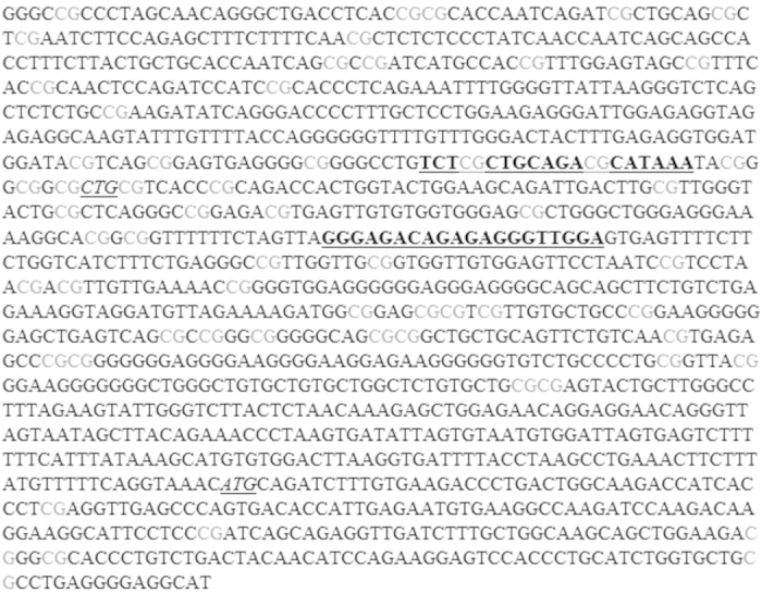 Part of the promoter sequence of UBC and the primer sequence of UBC_3 (depicted bold and underlined). The <t>qPCR</t> fragment is located around the transcription start site (CTG, italic underlined), starting from 31 bp upstream of the 5′-UTR (Untranslated Region) to 155 bp into this region and 553 bp upstream of the translation start codon (ATG, italic underlined). In the <t>PCR</t> fragment of the UBC_3 primers there are 14 CpG sites, of which one or more have differential methylation.