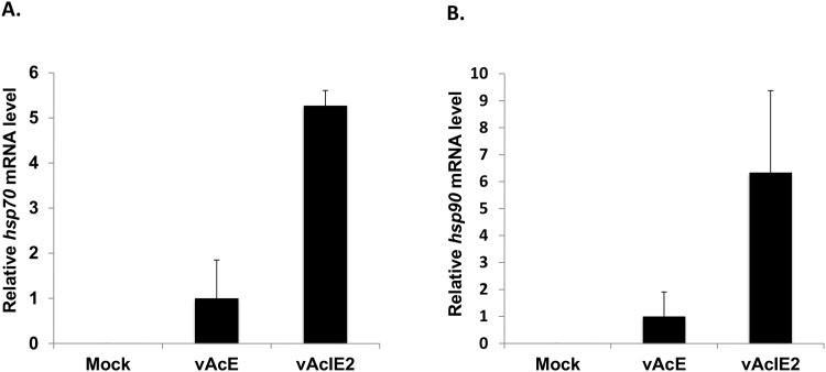 IE2 stimulates HSP70 and HSP90 expression in Vero E6 cells. Total RNA was extracted from vAcIE2-transduced Vero E6 cells at 6 hpt, and the transcripts of hsp70 (A) and hsp90 (B) were quantified by real-time quantitative PCR. The expression levels of hsp70 and hsp90 have been normalized to that of 18s rRNA. Total RNA from vAcE-transduced and non-transduced cells served as the controls.