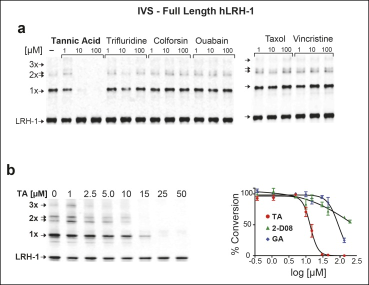 Effects of TA, other candidate hits, and published sumoylation inhibitors in an IVS assay of full-length hLRH1. ( A ) Dose-dependent inhibition of full-length (FL)-hLRH-1 by TA compared to other top candidate hits from primary screen as assayed by IVS. IVS assay and immunoblotting conditions used to detect hLRH-1 species are described in Materials and Methods. Sumoylated hLRH-1 (1x, 2x, 3x) and unmodified LRH-1 (LRH-1) species are indicated by arrows. ( B ) IVS assays of FL-hLRH-1 were performed with increasing concentrations of TA are shown (left panel) and plotted as normalized values in graph (right panel). Effects of two other published sumoylation inhibitors, 2-D08 and GA are also shown in graph. IVS data was normalized to DMSO control for each compound, and then plotted as percent conversion per log 10 [µM] concentration. Curve fitting of data is described in 'Materials and methods'. GA: Ginkgolic acid; IVS: In vitro sumoylation; TA: Tannic acid. DOI: http://dx.doi.org/10.7554/eLife.09003.013