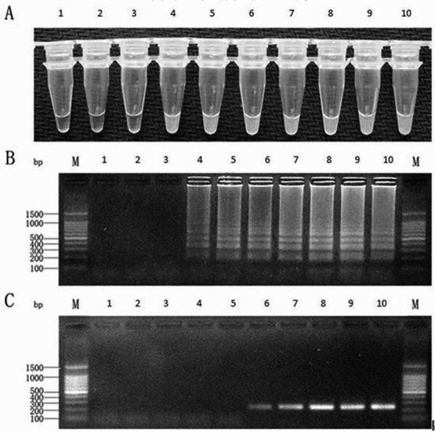 The sensitivity of LAMP and PCR. The panels show the DNA templates used at 0–10 8 copies/reaction of the ORFV standard plasmid. M:100 bp ladder marker. A, B: The sensitivity of LAMP with SYBR Green I staining and agarose gel analysis. C: The sensitivity of PCR with agarose gel analysis.