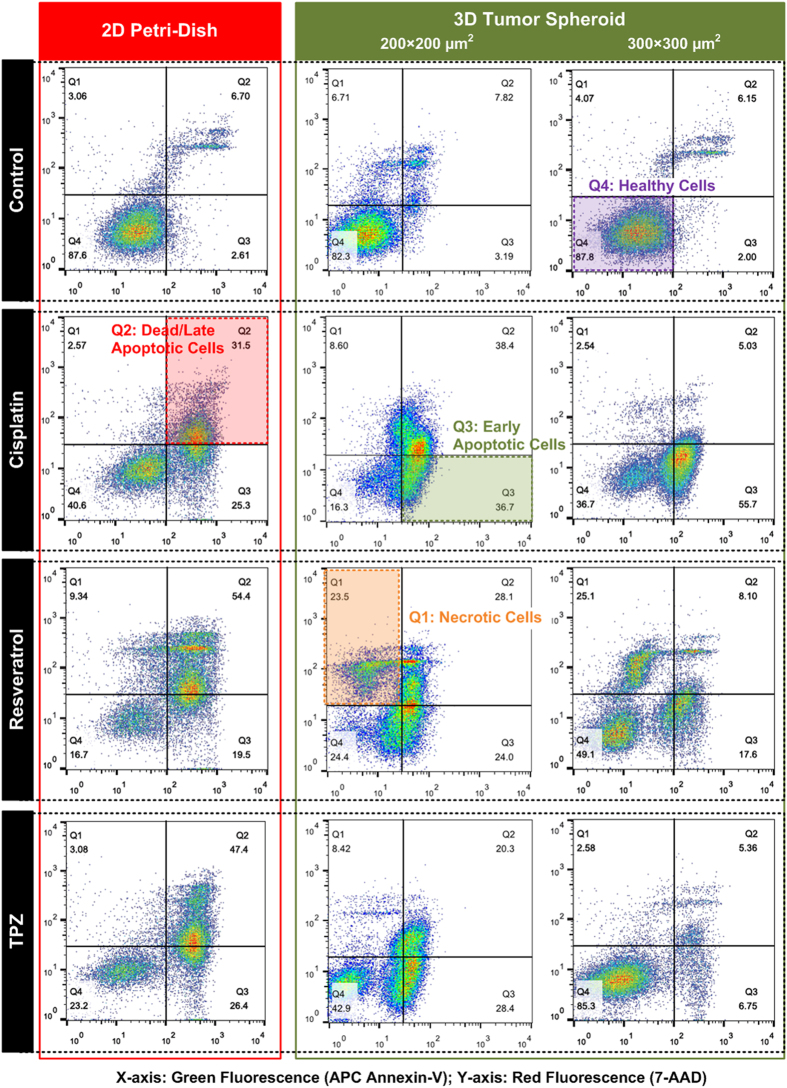 Density plots of flow cytometry analysis on APC-Annexin V and 7-AAD stained HepG2 cells (apoptosis and necrosis assay) cultured in 2D Petri-dish and dissociated from different sized tumor spheroids after 48-hour drug treatments.