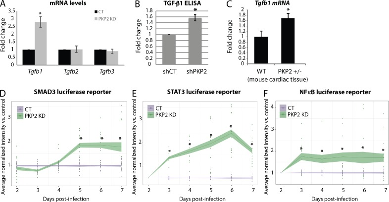 PKP2 loss triggers an increase in TGF-β1 expression and transcriptional signaling. (A) RNA isolated from control (CT) and PKP2 KD CMs were analyzed for mRNA levels of the TGF-β genes. Tgfb1 (but not Tgfb2 or Tgfb3 ) mRNA levels were significantly increased on KD of PKP2. (B). Levels of TGF-β1 were analyzed in the cell culture supernatants of control and PKP2 KD cells 72 h after KD by performing a TGF-β1 ELISA. These data indicate a significant increase in secreted TGF-β1 on loss of PKP2. (C) RNA isolated from wild-type and PKP2 +/− mouse heart tissue were analyzed for mRNA levels of Tgfb1 . Haploinsufficiency of PKP2 results in a significant increase in Tgfb1 mRNA in vivo. (D–F) SMAD3, STAT3, and NF-κB transcriptional activity was followed via luciferase reporter arrays (see Materials and methods). After control and PKP2 KD in 96-well plates, CMs were infected with luciferase reporter constructs for SMAD3, STAT3, or NF-κB and luciferase expression followed in the same cells by noninvasive imaging for a period of 6 d. KD of PKP2 caused a significant increase in transcriptional activity of SMAD3, STAT3, and NF-κB. For all graphs, fold change values from three independent samples are represented with error bars indicating SD. *, P