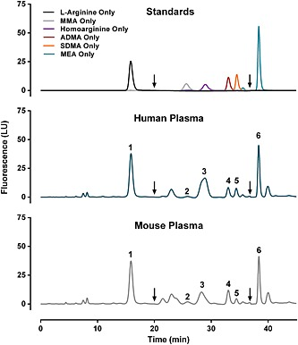 Resolution and identification of analytes. Arginine (50 µ m ), N G ‐monomethyl‐ l ‐arginine ( l ‐NMMA; 0.5 µ m ), homoarginine (0.5 µ m ), asymmetric dimethylarginine (ADMA; 0.5 µ m ), symmetric dimethylarginine (SDMA; 0.5 µ m ) and monoethyl‐ l ‐arginine (MEA; 50 µ m ) were analyzed individually to determine retention times. Peak identities: 1, arginine; 2, l ‐NMMA; 3, homoarginine; 4, ADMA; 5, SDMA; and 6, monoethyl‐Larginine (MEA, internal standard). Concentrations in human plasma (middle panel) were 89.7 µ m arginine, 0.09 µ m l ‐NMMA, 0.35 µ m ADMA and 0.28 µ m SDMA. Concentrations in mouse plasma (bottom panel) were 83.7 µ m arginine, 0.14 µ m l ‐NMMA, 0.51 µ m ADMA and 0.13 µ m SDMA. Arrows at 20 and 37 min indicate switch to increased sensitivity (PMT gain 16) and back to normal sensitivity (PMT gain 11), respectively.