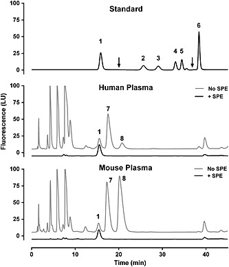 Survey of human and mouse plasma for potential contaminants. Human and mouse plasma were processed with protein precipitation [no solid‐phase extraction (SPE)] or with solid phase extraction using mixed‐mode cation exchange columns (+SPE). For these analyses, plasma samples were not spiked with MEA (internal standard) and photomultiplier tube (PMT) gain remained constant (11) for the duration of the run. Plasma samples were compared with a combined standard (top panel) to identify potential contaminants that may co‐elute with target analytes if not fully eliminated by SPE. Arrows at 20 and 37 min indicate switch to increased sensitivity (PMT gain 16) and back to normal sensitivity (PMT gain 11), respectively. Sensitivity was not increased in the bottom two panels and traces were artificially shifted up (no SPE) and down (+SPE) to aid visualization. Peak identities: 1, arginine; 2, l ‐NMMA; 3, homoarginine; 4, ADMA; 5, SDMA; 6, MEA; 7, alanine; and 8, taurine.