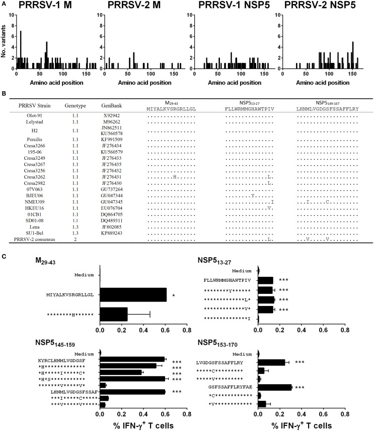 Assessment of the conservation of identified T cell antigens M and NSP5 among PRRSV strains and assessment of T cell reactivity against variant peptides . The complete predicted amino acid sequences of M (from 64 PRRSV-1 and 31 PRRSV-2 strains) and NSP5 (from 19 PRRSV-1 and 36 PRRSV-2 strains) were aligned and the number of different amino acid variants at each residue plotted (A) . The predicted amino acid sequences of identified antigenic regions, M 29-43 , NSP5 13-27 , and NSP5 149-167 , were compared among the panel of 19 PRRSV-1 strains, for which both M and NSP5 sequence data were available, and a consensus sequence based on available PRRSV-2 strains (B) . Based on the observed amino acid substitutions, variant peptides were used to stimulate PBMC from pigs 71 and 86 (C) . IFN-γ expression by CD4 T cells to M 29-43 (pig 71) and CD8 T cells to NSP5 13-27 (pig 71), NSP5 145-159 (pig 86), and NSP5 153-170 (pig 71) peptides were assessed by flow cytometry. The mean% of unstimulated (medium) and peptide stimulated data from duplicate cultures are presented and error bars show the SEM. Values were compared to the unstimulated control using a one-way ANOVA followed by a Dunnett's multiple comparison test; *** p