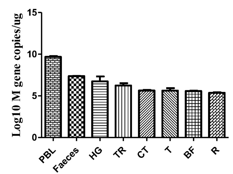 Viral copies in the selected tissues from AIV H9N2-infected geese at 5 dpi. The efficiency of AIV M gene amplification by qRT-PCR was 100.1%, and R 2 was 0.998. The average viral copy number showed an evident difference between individual samples. The average number of viral copies was detected in the peripheral blood (10 9.68 copies/μg), feces (10 7.36 copies/μg), HG (10 6.74 copies/μg), TR (10 6.24 copies/μg), CT (10 5.64 copies/μg), T (10 5.63 copies/μg), BF (10 5.59 copies/μg), and R (10 5.37 copies/μg). The data are expressed as the mean ± SEM ( n = 3).