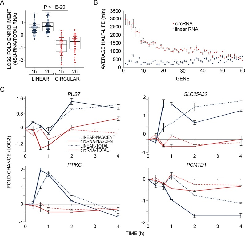 Analysis of newly transcribed RNAs reveals that circRNAs are more stable and static than the linear isoforms derived from the same host genes. ( A ) MCF10A cells were treated with EGF as in Figure 1B and RNA was simultaneously metabolically labeled using 4-thiouridine (4sU), for the indicated time intervals. RNA was extracted (Total-RNA) with Trizol, biotinylated and purified on streptavidin magnetic beads (denoted 4sU-RNA). Flow-through RNA was also collected (denoted FT-RNA). Thereafter, RNA was reverse transcribed and quantified using high-throughput real time PCR (Fluidigm). The boxplot diagram shows enrichment of newly transcribed RNA (4sU labeled) in linear isoforms (blue dots) relative to the respective circRNA isoforms (red dots; P