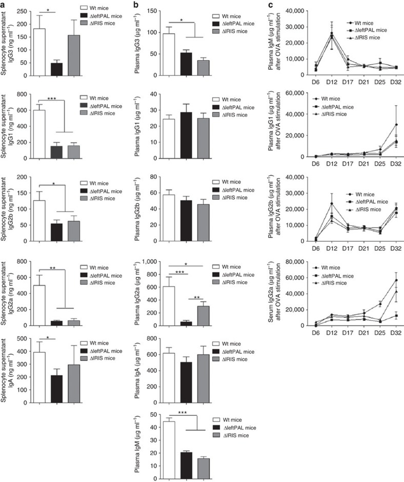 Influence of the 3'RR palindrome on Ig synthesis. ( a ) ELISA analysis of IgG 1 , IgG 2a , IgG 2b , IgG 3 and <t>IgA</t> in supernatants of LPS±IL-4-, INFγ- and TGFβ-stimulated splenocytes of ΔleftPAL, Δ IRIS and wt mice. Data are the mean±s.e.m. of eight experiments with one mouse (8–12 weeks old, male and female). * P