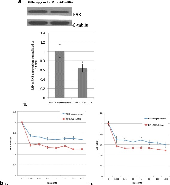 Targeting FAK via RNAi enhanced the growth-inhibitory effects of <t>rapamycin.</t> a FAK protein ( i ) and mRNA expression ( ii ) in REH-empty vector and REH-FAK shRNA cells. b The <t>mTOR</t> inhibitor rapamycin and FAK down-regulation inhibited the proliferation of REH cells. REH-empty vector or REH-FAK shRNA cells were plated in 96-well plates and cultured with rapamycin (0–1000 nM). After 2 days ( i ) or 3 days ( ii ), the cells were treated with CCK-8 (10 μl/well) for 2 h and the absorbance was measured. The results represent the mean ± S.D. of three experiments performed in triplicate
