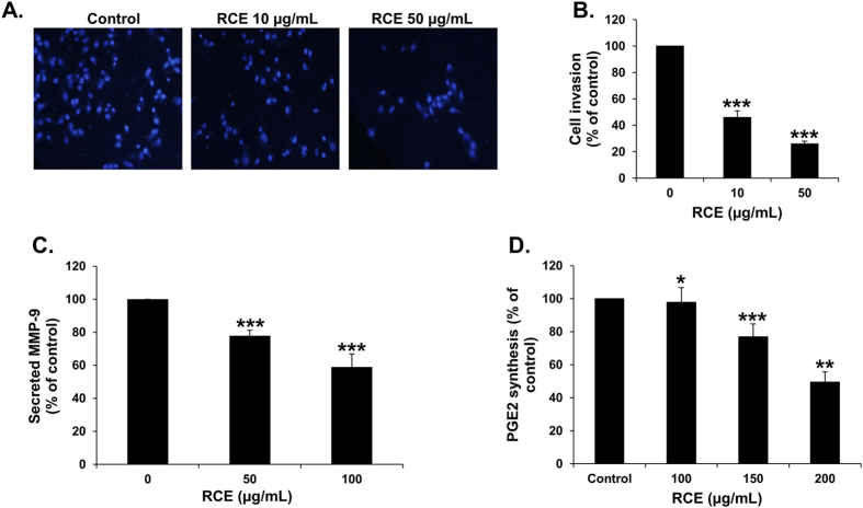Rhus coriaria inhibits the invasion, downregulates MMP-9 and prostaglandin E 2 (PgE2). ( A ) MDA-MB-231 cells were incubated for 24 h with or without RCE (10 and 50 μg/mL). Cells that invaded into the matrigel were scored as described in Materials and Methods. DAPI-stained nuclei of invading cells were photographed at X 100 magnification under an inverted microscope (Nikon Ti-U, Nikon). ( B ) Quantification of invaded MDA-MB-231 into the matrigel. Values represented in percent were calculated from three independent experiments and are represented as mean ± SEM. Statistical analysis was performed using one-way ANOVA ( *p