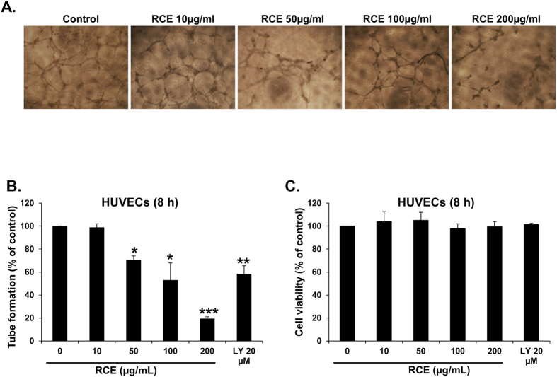 Effect of Rhus coriaria on the formation of capillary-like structures by HUVECs in vitro. ( A ) Patterns of angiogenesis induced by human umbilical vein endothelial cells (HUVECs) cultured on Matrigel matrix in 96-well plates with or without RCE. ( B ) Quantification of tubular morphogenesis induced in HUVECs cells cultured with or without RCE. Tube formation was determined by the length of tube-like structures containing connected cells. LY (20 μM) was used as positive controls for angiogenesis inhibition in this assay. Data are mean ± S.E.M. from three independent experiments. Statistical analysis was performed using one-way ANOVA ( *p