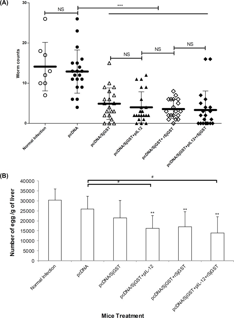 The worm and hepatic egg burdens of vaccinated animals challenged with Schistosoma japonicum . Six groups of mice were immunized with pcDNA4 vehicle, pcDNA/SjGST vaccine, pIL-12 and rSjGST. The vaccinated mice were infected with 30 cercaria/ mouse. Each group included 19–21 animals (with the exception of Group I, n = 8) from three independent experiments. Eight weeks after schistosome infection, (A) adult worms were collected from infected mice and counted under an anatomy microscope. Each point represents the number of worms in a single mouse. The horizontal black lane represents the mean ± SD of that group. NS: not significant; ***: p