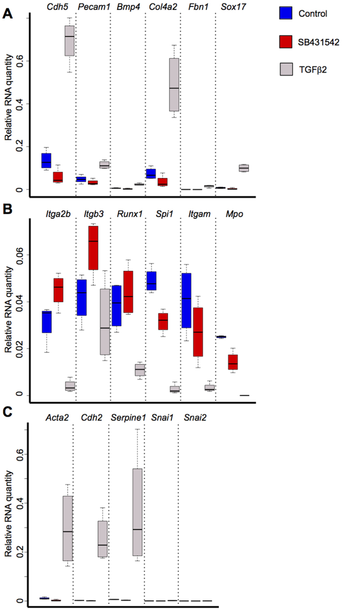 TGFβ signalling activation decreases haematopoietic gene expression and increases EMT and vascular genes transcription. ( A ) Box plots comparing the expression of vascular specific genes between the control, SB431542 and TGFβ2 conditions. ( B ) Box plots comparing the expression of haematopoietic genes between the 3 conditions. ( C ) Box plots comparing the expression of EMT specific genes between the 3 conditions. The box plots were generated from 4 independent experiments. For each plot, the top and bottom box edges correspond to the first and third quartiles. The black line inside the box represents the median. The top and bottom whisker lines mark the maximum and minimum values of the data set, respectively. The corresponding p-values were calculated with Student's t-test ( Supplementary Table S7 ).
