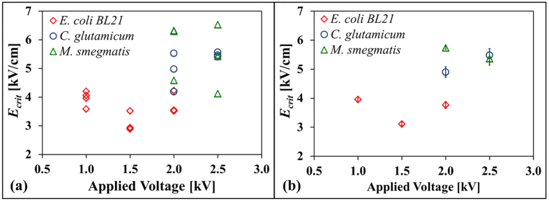 Critical electric field ( E crit ) for bacterial electroporation as a function of applied voltage. Panel ( a ) shows the values obtained from individual experiments, visualizing the data shown in Table 1 ; panel ( b ) shows averages (error bars show ± Δ E crit ) for each bacterium at each applied voltage. These values indicate that (gram-negative) E. coli BL21 requires a smaller E crit than C. glutamicum and M. smegmatis (gram-positive) bacteria.