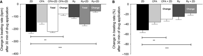 (A) The effect of I(f) inhibition on the spontaneous beating rate of mouse atrial preparations by 1 μ mol/L ZD 7288 ( n = 9), ryanodine receptor inhibition by 30 μ mol/L ryanodine ( n = 6), and by the combined application of 30 μ mol/L ryanodine + 1 μ mol/L ZD 7288 ( n = 6, Total represents cumulative change from baseline, while Change represents a relative change after ryanodine), SERCA inhibition by 100 μ mol/L CPA ( n = 7) and combined application of 100 μ mol/L CPA + 1 μ mol/L ZD 7288 ( n = 6, Total represents cumulative change from baseline, while Change represents a relative change after CPA ). (B) Data presented as percentage change relative to baseline (except for 30 μ mol/L ryanodine + 1 μ mol/L ZD 7288, and 100 μ mol/L CPA + 1 μ mol/L ZD 7288 combinations as the % changes are calculated relative to reduced baseline by ryanodine and CPA , respectively). Data are expressed as mean ± SEM , n = number of experiments. GraphPad prism (version 5.0) software was used to perform statistical analysis including Student's t ‐test (significance level, P