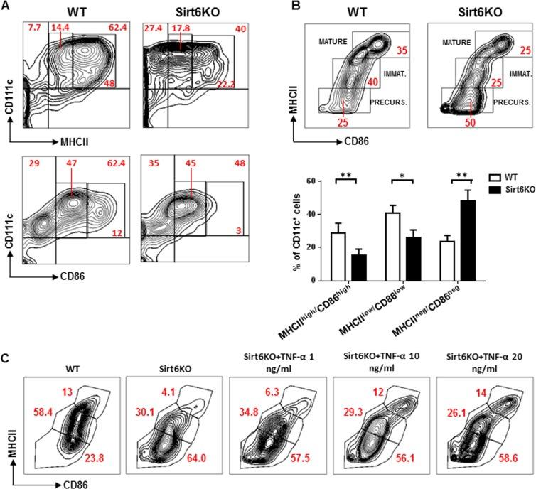 Sirt6 deletion hampers the spontaneous maturation of BMDCs ( A , B ) BM cells from WT and Sirt6KO mice were cultured for 6 days with 20 ng/ml GM-CSF. At day 6, cells were re-seeded in the presence of 5 ng/ml GM-CSF and CD86, MHCII, and CD11c expression was determined at day 7 by flow cytometry. ( A , B ) One representative experiment out of eight is presented. ( B ) lower inset, results are means ± SEM of eight separate experiments; n=13 for each genotype; *: p