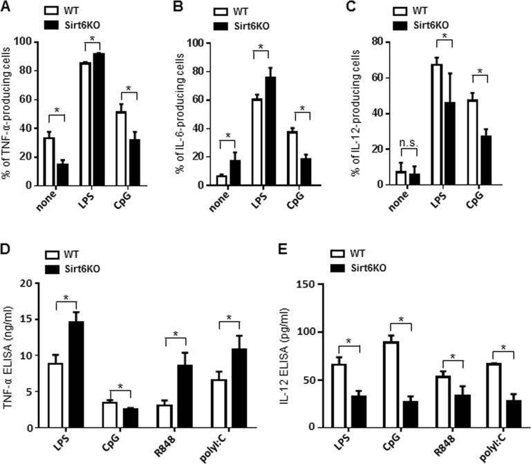 Sirt6 deletion skews cytokine production in BMDCs ( A - E ) WT and Sirt6KO BMDCs were harvested at day 8 and stimulated for 24 h with or without different TLR ligands. ( A - C ) Cells were harvested, stained for CD11c, CD86 and intracellular TNF-α, IL-6 or IL-12. CD11c + CD86 + TNF-α-, IL-6-, or IL-12-producing cells were quantified by flow cytometry. Results are means ± SEM of three-to-five separate experiments, n=3-10 for each genotype. In ( D , E ), cytokine secretion into cell supernatants was measured by ELISA. Results are means ± SEM of 3-10 separate experiments; *: p