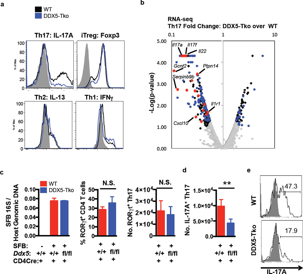 Requirement for DDX5 in Th17 cytokine production in vitro and at steady state in vivo a , Selective Th17 cell differentiation defect in DDX5-deficient T cells after polarization for 96 h. Representative of three independent experiments. b , Volcano plot of RNA-seq of cultured Th17 cells from DDX5-Tko mice and littermate controls. Black dots: differentially expressed genes (minimum fold change of two with p-value