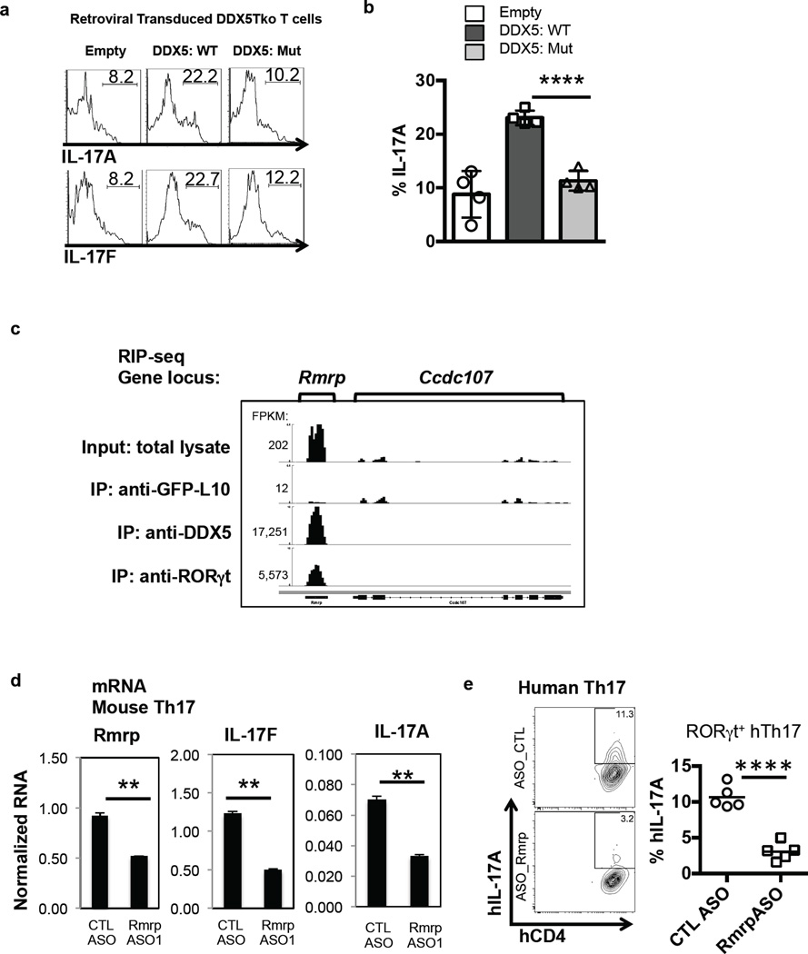 Requirement for helicase-competent DDX5 and its associated lncRNA Rmrp in induction of Th17 cell cytokines a , Cytokine production in DDX5-Tko cells transduced with WT or helicase-mutant DDX5 and subjected to sub-optimal Th17 cell polarization. b , Results from four independent experiments shown (a). c , IGV browser view of Rmrp showing coverage of mapped RNA reads from total Th17 lysate, Ribosome TRAP-seq (described in Methods), DDX5 RIP-seq, and RORγt RIP-seq. d , Effect of mouse Rmrp-specific ASO. Results are representative of three independent experiments with two technical replicates. e , IL-17A production following Rmrp knockdown in in vitro polarized human Th17 cells. Each symbol (right panel) represents cells from a healthy donor (n=5). Graphs show mean ± s.d. CTL, control; ** p