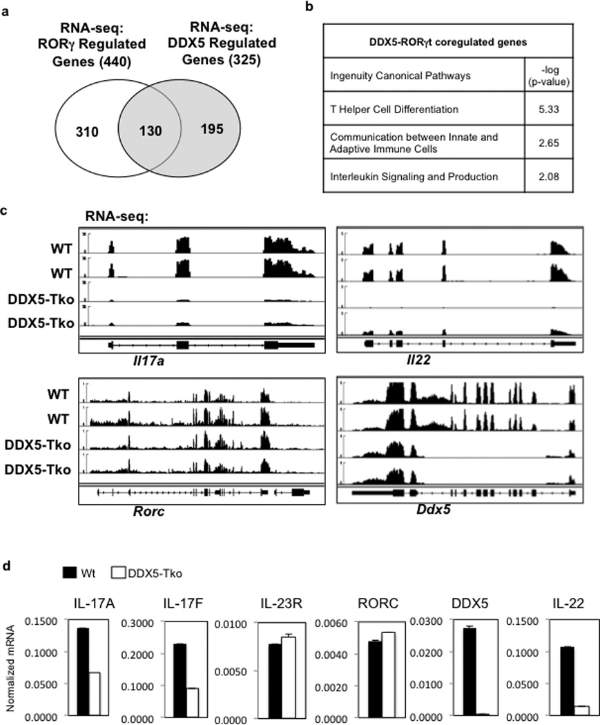 DDX5 co-regulates a subset of RORγt transcriptional targets in polarized Th17 cells a , Venn diagram of distinct and overlapping genes regulated by RORγt and/or DDX5, as determined from RNA-seq studies. b , Ingenuity Pathway Analysis of DDX5- and RORγt-coregulated genes. c , IGV browser view showing biological replicate RNA-seq coverage tracks of control, DDX5-Tko, or RORγt-deficient in vitro polarized Th17 cell samples at the Il17a, Il22, Ddx5 , and Rorc loci. d , Independent qRT-PCR validation of RNA-seq results confirming effects of DDX5 deletion on RORγt target gene expression. Graph shows mean ± s.d.