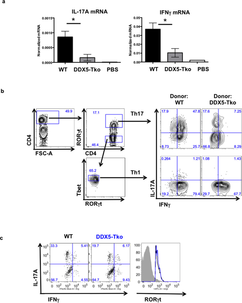 Influence of DDX5 on T cell phenotypes in autoimmune disease models a , At 8 weeks after T cell transfer, LILP mononuclear cells were evaluated for amounts of IL-17A and IFNγ mRNA by qRT-PCR. Results are representative of two independent experiments. Each experiment was performed using large intestines from 3 animals in each condition. qRT-PCR was performed with two technical replicates. Graph shows mean ± s.d. * p