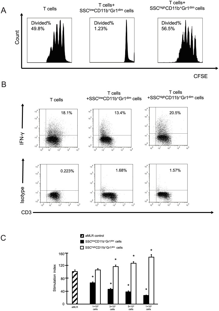SSC low CD11b + Gr1 dim cells in the livers suppress T cell responses. (A) Proliferation of CFSE-labeled T cells cultured in the presence of Dynabeads mouse T-Activator CD3/CD28 with or without liver SSC high or SSC low CD11b + Gr1 dim cells. (B) Representative image of intracellular interferon-γ staining for T cells cultured with or without liver SSC high or SSC low CD11b + Gr1 dim cells. (C) T cells and allogenic dendritic cells were co-cultured. Liver SSC high and SSC low CD11b + Gr1 dim cells were added to the cultures. The data obtained from 3 separate experiments are shown. * P