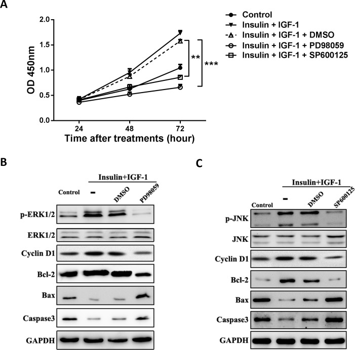 Inhibition of ERK1/2 or JNK signaling abolishes the proliferative and anti-apoptotic effects of insulin/IGF-1 in vitro . MC38 cells were cultured with insulin and IGF-1 alone or both together for 72 hours. ERK1/2 inhibitor PD98059 (B), JNK inhibitor SP600125 (C) or their vehicle DMSO added to the cultures when MC38 cells were treated with both insulin and IGF-1. (A) Cells were collected for proliferation analysis with CCK-8 assay at 24, 48 and 72 hour. **P