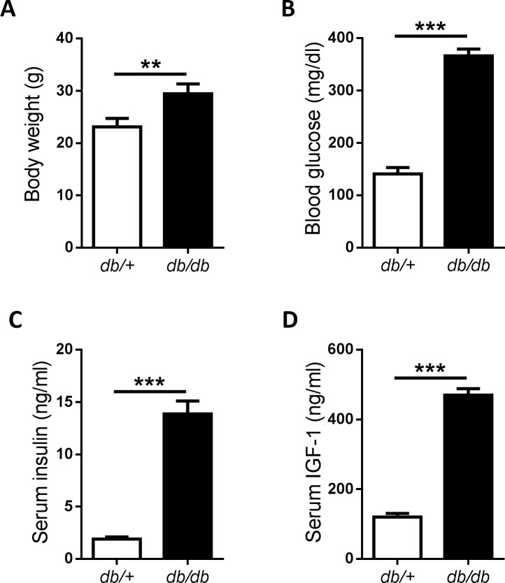 Establishment of type 2 diabetes model with db/db mice. Male db/db mice were used as mouse type 2 diabetes models, while db/+ littermates as normal controls. Body weight (A), blood glucose (B), insulin (C) and IGF-1 (D) were determined before MC38 cells injection at 8 th week. *P