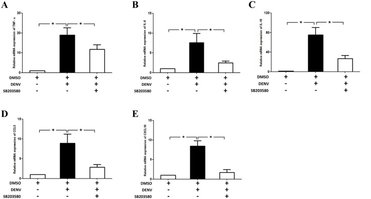 SB203580 modulates the cytokine and chemokine gene expressions in DENV infection Mice were infected with 4 × 10 5 FFU/ml of DENV and treated with 2%DMSO (v/v) or SB203580 dissolved in 2%DMSO. The control (uninfected) group was treated with 2%DMSO (v/v) alone. Treatments were given 1 h before and after DENV infection and again at 24 h after infection. On day 7 after infection, the liver tissues were collected, and RNA was extracted, cDNA were prepared and which undergone Real-time RT PCR analysis with individual primer set. GAPDH is used as the house keeping gene. The mRNA expression of (A) TNF-α (B) IL-6 (C) IL-10 (D) CCL-5 (E) CXCL-10 are shown. Results were represented in the graph by three independent experiments for at least 3 independent mice from each group. Statistical analysis is conducted by One Way ANOVA using GraphPad Prism Software Version 5. The asterisks indicate statistically significant differences between groups ( p