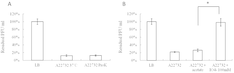 """Effects of different treatments of bacteria on phiAxp-1 adsorption. The results are shown as residual PFU percentages. ( A ) Effect of proteinase K treatment on the adsorption of phiAxp-1 to A. xylosoxidans strain A22732. ( B ) Effect of periodate treatment on the adsorption of phiAxp-1 to A. xylosoxidans strain A22732. The control (LB and """"A22732 + acetate""""), untreated strain (A22732), and treatment (""""A22732 + ProtK"""" for proteinase K treatment and """"A22732 + IO 4− """" for periodate treatment) groups were tested for adsorption, as indicated in the x- axes. Error bars denote statistical variations. Significance was determined by a Student's t test for comparison between the treated and the untreated groups. * P 0.05."""