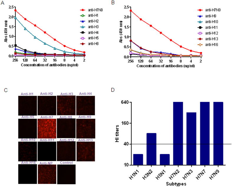 Cross-reactivity between H7N9 HA and antibodies against heterosubtypes of influenza A viruses. ( A,B ) Cross-reactivities in ELISA. ELISA tests were performed with H7N9 HA expressed in insect cells as coating antigen. Antisera against H1, H2, H3, H4, H5, and H8 ( A ), and H9, <t>H10,</t> H11, H12, H13, and H16 ( B ) were serially diluted starting at a dilution of 256 ng/ml to react with the coating antigens. Antisera against H7N9 HA were used as positive control. ( C ) Cross-reactivities in indirect immunofluorescence assays. MDCK cells infected with Anhui/1 at an MOI of 0.1 were fixed with 4% formaldehyde and probed with antisera against HA proteins of H1, H2, H3, H4, H5, H8, H9, H10, H11, H12, H13, and H16 with a concentration of 0.5 μg/ml. Antisera against H7N9 HA were used as positive control. ( D ) Cross-reactivities in Hemagglutination inhibition (HI) assays. The assays were carried out using the A/Anhui/1/2013 (H7N9) strain and antisera against whole virus of H1N1, H3N2, and H5N1 with antisera against H7N9-, H7N2-, H7N3-, and H7N7-HA as positive controls. Serum with titers > 40 were considered HI-positive for H7N9 virus.