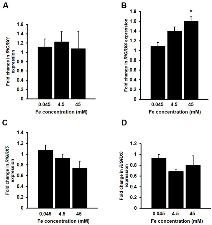 Effect of iron on the expression of the R . irregularis GRX genes. R . irregularis was grown in M-C media containing 45 μM Fe (control) or supplemented with 4.5 mM Fe or 45 mM Fe medium for 2 weeks. RiGRX1 (A), RiGRX4 (B), RiGRX5 (C) and RiGRX6 (D) gene expression. Data were normalized using the housekeeping gene RiTEF . Relative expression levels were calculated by the 2 -ΔΔCT method. Data are means +/- standard error. Asterisks show statistically significant differences (p