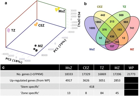 Internode zones have unique RNAseq profiles and contain stem- and zone-specific genes. a Principal component analysis of FPKM values obtained from RNA sequencing of the MsZ, CEZ, TZ, and MZ of internode 5. b Venn diagram of genes up-regulated greater than a log 2 fold change of one against the background levels in the whole plant (WP) transcriptome. c Table showing the number of genes expressed > 1 FPKM, number of genes up-regulated against the WP transcriptome with > 1 log 2 fold, number of identified 'stem-specific' genes with > 2.5 log 2 fold change against the WP background and > 80 FPKM in any internode zone, and the number of 'zone-specific' genes with, in addition to being 'stem-specific', > 2 log 2 fold change against all other internodal zones (with some exceptions, see Additional file 2 )