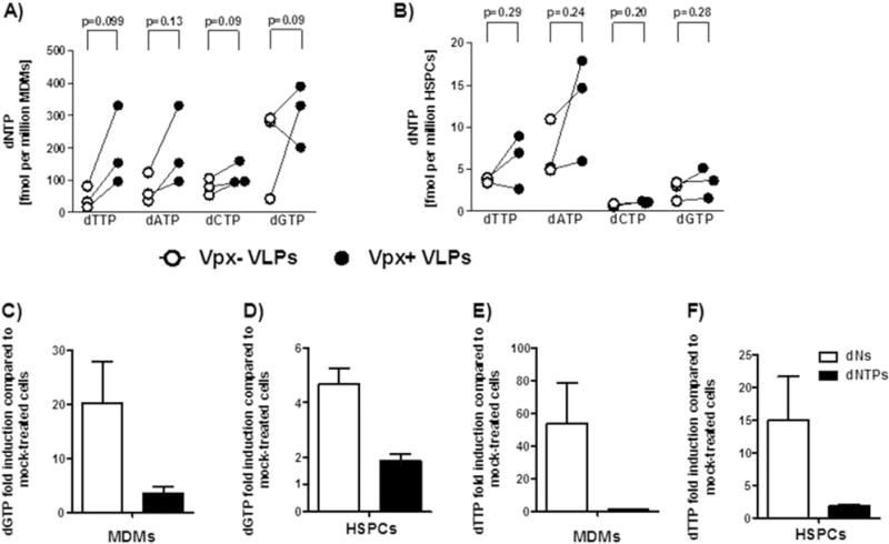"Vpx+ virus, dN and <t>dNTP</t> treatments result in minor increases in the dNTP pool of HSPCs. MDMs (A, C and E) and freshly isolated HSPCs (B, D and F) were pretreated for 2 h with Vpx+/− viruses, dNs or <t>dNTPs,</t> and cultured for 3 days before cell lysis. Quantification of dNTPs was done by a single nucleotide incorporation assay (see ""Material and methods"" section). Fold induction was calculated based on the absolute values of vero- vs mock-treated samples (C–F). White dots represent Vpx− virus-pretreated samples, black dots represent Vpx+ virus-pretreated samples (A–B). White bars represent dN-pretreated samples, black bars represent dNTP-pretreated samples (C–F). Data are from three donors and bars represent mean ± SEM. Statistical analysis was done using two-tailed paired t-test."