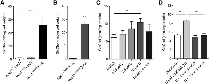 GlcChol abnormalities in NPC. A: GlcChol (nanomoles per gram wet weight) in liver of BALB/c Npc1 +/+ , Npc1 +/nih and Npc1 nih/nih male mice at 80 days of age (n = 3, mean ± SD). B: GlcChol (nanomoles per gram wet weight) in liver of C57BLKS Npc1 +/spm and Npc1 spm/spm male mice at 80 days of age (n = 3–5, mean ± SD). C: GlcChol (picomoles per milligram protein) in RAW264.7 cells incubated with the indicated concentration of U18666A for 1 day in the absence and presence of CBE-inhibiting GBA (n = 3, mean ± SD). D: GlcChol picomoles per milligram protein) in RAW264.7 cells incubated with 10 μM U18666A for 8 h and in the subsequent absence or presence of 1 mM β-methyl-cyclodextrin (β-mCD) reducing intralysosomal cholesterol for 18 h (n = 3, mean ± SD). Data were analyzed using an unpaired t -test. ** P