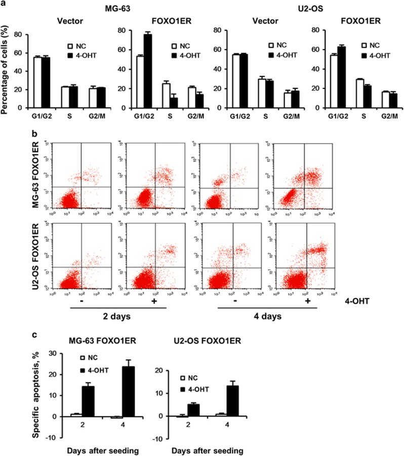 FOXO1 induces growth arrest and apoptosis in osteosarcoma cell lines. OS cell lines stably expressing the empty vector or FOXO1ER were seeded in six-well plates at a density of 2.5 × 10 5 cells per well and treated with 4-OHT (100 n M ) or vehicle. At different time points as indicated, cells were collected for cell cycle analysis ( a ) and apoptosis assay ( b , c ). ( a ) FOXO1 activation inhibits cell-cycle transition. After 24 h, cells were harvested and cell-cycle distribution was analyzed by propidium iodide staining. Bars represent the mean of three measurements±s.d. ( b ) FOXO1 induces cell apoptosis. Apoptosis was measured by annexin V-PE/7-AAD staining. The data are representative of at least three independent experiments that gave similar results. ( c ) The results of ( b ) are represented as specific apoptosis (SA): SA (%)=100(AE−AC)/(1−AC), where AE equals percentage of apoptotic cells in the experimental (4-OHT) group and AC equals percentage of apoptotic cells in the control (vehicle) group. Data are mean±s.d. of at least independent experiments.