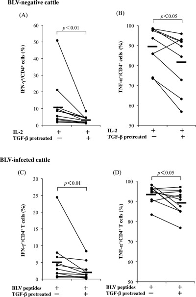 Inhibition of IFN‐γ and TNF‐α production from CD4 + T cells by TGF‐β. PBMCs from normal cattle (IFN‐γ: n = 12, TNF‐α: n = 9) and BLV‐infected cattle ( n = 11) were pretreated with TGF‐β for 2 h and were cultivated with <t>IL‐2</t> alone (A and B) or synthesized peptides from the BLV envelop region (C and D). IFN‐γ‐ or TNF‐α‐producing CD4 + T cells were detected using flow cytometry.