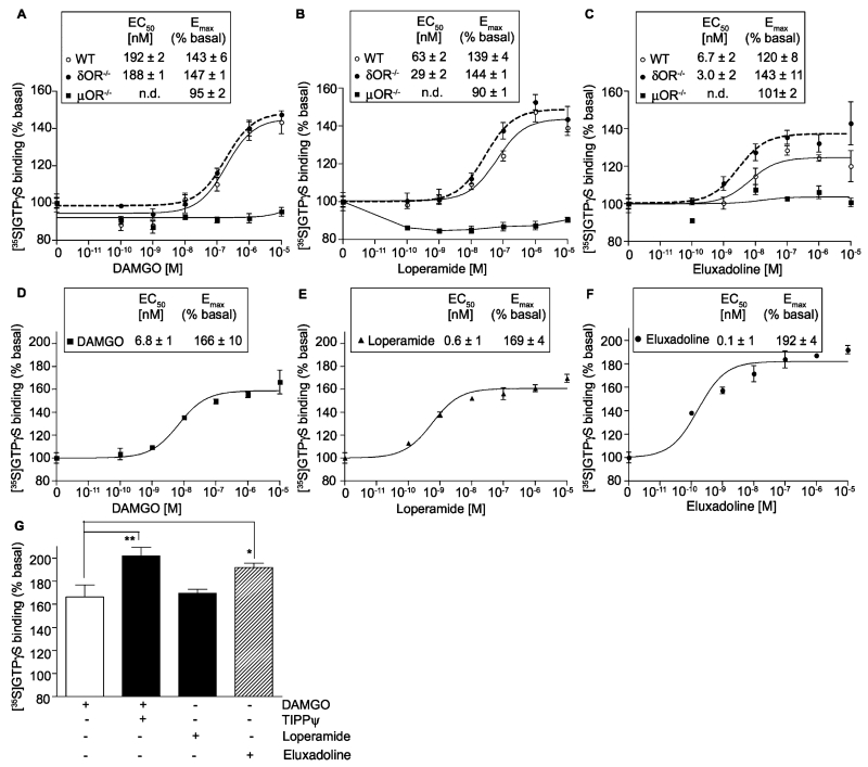 Effect of <t>DAMGO,</t> loperamide and eluxadoline on G-protein activation. (A–C) Membranes (10 μg) from spinal cords of WT, μOR −/− and δOR −/− mice were subjected to a [ 35 <t>S]GTPγS</t> binding assay using DAMGO (A), loperamide (B), and eluxadoline (C) (0–10 μM final concentration) as described in Section 2. (D–G) Membranes (20 μg) from the ileum of WT mice were subjected to a [ 35 S]GTPγS binding assay using DAMGO (D and G), loperamide (E and G), and eluxadoline (F and G) (0–10 μM final concentration) in the presence or absence of TIPPψ (10 nM final concentration) as described in Section 2. (G) Represents E max (% of basal) obtained with 10 μM final concentration of DAMGO (±10 nM final concentration of TIPPψ), eluxadoline or loperamide. Basal values determined in the absence of the agonist were taken as 100%. Results are the mean ± S.E.M. n = 3–9. n.d., Not determined. * p