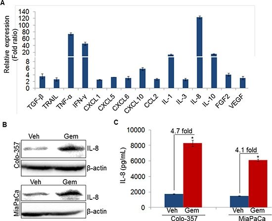 Gemcitabine induces IL-8 expression in pancreatic cancer cells A. Colo-357 cells were treated with gemcitabine (10 μM) for 8 h. Subsequently, RNA was isolated, cDNA was prepared and cytokines/growth factors profiling was performed using qRT-PCR. B. Colo-357 and MiaPaCa cells were treated with gemcitabine (10 μM) for 8 h. Post treatment, media was replaced with fresh culture medium and incubated for next 24 h. Thereafter, total protein was isolated and subjected to immunoblot analysis to examine IL-8 expression using specific antibody. β-actin was used as a loading control. C. Level of IL-8 in conditioned media of vehicle or gemcitabine treated PC cells was measured using ELISA as described in materials and methods. Data is presented as mean ± SD; n = 3 .* p