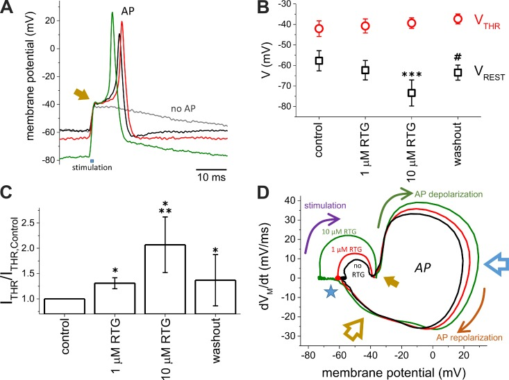 The resting potential, but not the threshold potential for triggering AP, was affected by Retigabine. (A) APs were recorded from Xenopus oocytes coexpressing both the α and β subunits of Na V 1.4, ShakerIR, K V 7.2, and K V 7.3. The APs were recorded using the loose two-electrode voltage-clamp technique (see Materials and methods for details) in the absence (black trace) or presence of 1-µM (red trace) or 10-µM (green trace) Retigabine. The gray trace shows the response of V M when a subthreshold was applied. The arrow indicates the moment at which AP threshold (V THR ) is reached. (B) Effect of Retigabine (RTG) on the resting membrane potential (V REST ) and AP threshold (V THR ). (C) Minimum current injection needed to evoke an AP (I THR ). The values of I THR were normalized by I THR in the absence of Retigabine ( n = 4). (D) Example of a phase plot calculated from the APs shown on A. V REST was strongly affected by Retigabine (blue star), whereas V THR remained fairly unaltered. Although the depolarization phase was affected by Retigabine (blue arrow), the late phase of repolarization (yellow arrow) remained unaltered. Arrows indicate the progress of the AP in time during the stimulation phase (purple arrow), depolarization phase (green arrow), and repolarization phase (orange arrow). The open blue arrow points at the times when APs reached their maximum voltage. The open yellow arrow points at the late repolarization phase. Error bars represent standard deviation. t test; n = 5. *, P