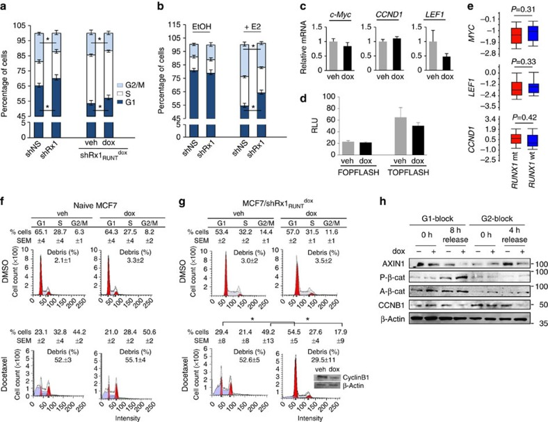RUNX1 silencing deregulates breast cancer cell mitosis. RUNX1 was knocked down in MCF7 cells either constitutively ( a (left) and b ) or conditionally upon treatment with dox ( a (right), c , d g and h ). Cells were maintained in medium supplemented with either complete serum ( a , c , d , f – h ) or CSS ( b ). ( a , b ) Cell cycle profiles were obtained by FACS analysis of <t>propidium</t> iodide-stained cells. In b , cells were treated with either vehicle control (EtOH) or estradiol (E2) for 48 h as indicated. * P