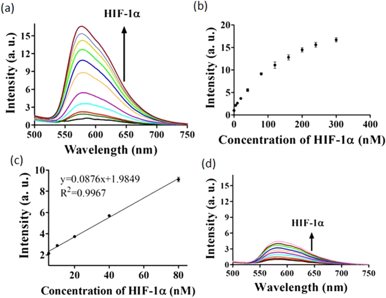( a ) Luminescence response of 5 to various concentrations of HIF-1α: 0, 5, 10, 20, 40, 80, 120, 160, 200, 240 and 300 nM in buffered solution. ( b ) The relationship of signal intensity (λ Em = 580 nm) and the concentration of HIF-1α. ( c ) Linear plot of the signal change in luminescence intensity (λ Em = 580 nm) vs . HIF-1α concentration. Error bars represent the standard deviations (SD) of the results from three independent experiments. ( d ) Luminescence spectra of 5 in response to various concentrations of HIF-1α: 0, 5, 10, 20, 40, 80, 120, 160, 200, 240 and 300 nM in a detection system without Nt.BbvCI.