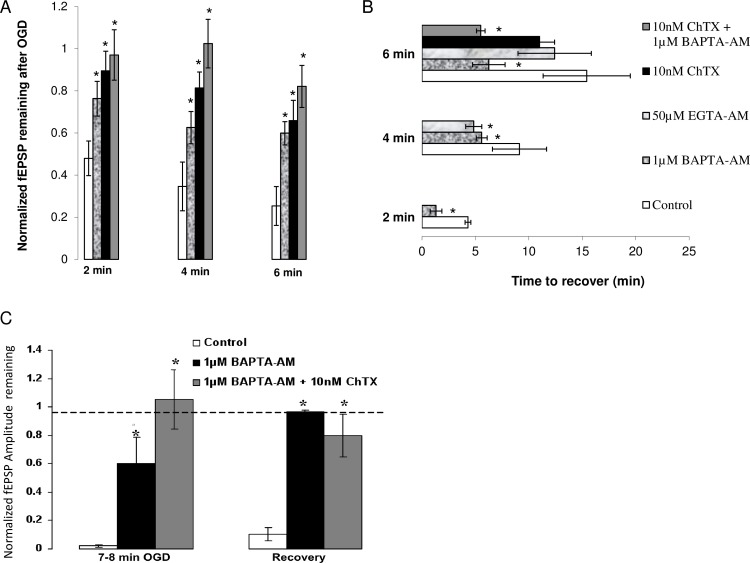 (A) Effect of calcium chelators and K channel antagonist, ChTX on fEPSP during OGD. 1μM <t>BAPTA-AM</t> increases the amount of evoked neurotransmission remaining after 2 min (n = 7), 4 min (n = 6) and 6 min (n = 5) of ischemia relative to control (n = 7, 5, 5, respectively). Similarly, the amplitude of fEPSPs remaining after 2 min, 4 min, 6 min of OGD (n = 6) is increased after administration of 10 nM ChTX. Combining ChTX and BAPTA-AM led to almost no change in fEPSP amplitude up to 6 min of OGD (n = 6). ( B) Effect of calcium chelators, and BK channel antagonist on recovery of fEPSP after OGD. BAPTA-AM (1 μM) decreases recovery time from 2 min (n = 7), 4 min (n = 6) and 6 min (n = 3) of in vitro OGD compared to control (n = 7, 5, 5, respectively). <t>EGTA-AM</t> (50μM) shows similar effects to BAPTA-AM (1μM) by decreasing time needed for electrophysiological recovery after 4 min of OGD (n = 6) but not after 6 min (n = 7). ChTX (10 nM) did not significantly decrease recovery time after 6 min of ischemia (n = 4) but a combination of BAPTA-AM (1 μM) and ChTX(10 nM) significantly decreased recovery time after 6 min of OGD (n = 6). ( C) BAPTA-AM and BAPTA-AM + ChTX promote increased tissue resistance to a long ischemic episode. BAPTA-AM (1 μM) increases the amount of fEPSP remaining after 8 min of OGD and leads to full recovery after 40 min of reperfusion post ischemia (n = 3) when control tissue has surpassed the point of functional recovery (n = 4). A combination of BAPTA-AM (1 μM) and ChTX (10 nM) leads to almost no change in fEPSP amplitude after prolonged OGD and leads to almost full recovery after 40 min of reperfusion (n = 5). Data plotted as mean ± SE. * p