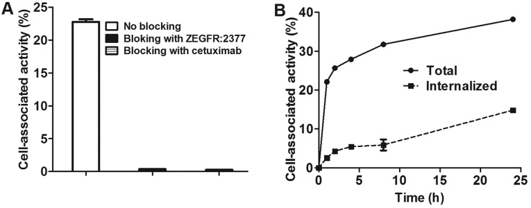 (A) In vitro specificity of 89 Zr-DFO-ZEGFR:2377 binding to EGFR-expressing A431 cells. (B) Cellular processing of 89 Zr-DFO-ZEGFR:2377 by A431 cells during continuous incubation.