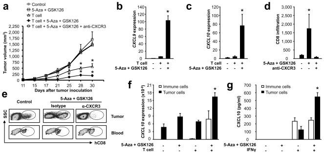 Epigenetic reprogramming alters cancer T cell immunotherapy Effects of GSK126 and 5-AZA dC on T cell immunotherapy. Ovarian cancer-bearing NSG mice were treated with GSK126, 5-AZA dC and/or anti-CXCR3, and received TAA-specific CD8 + T cell transfusion. Tumor volume ( a ), tumor chemokine expression ( b, c ), tumor-infiltrating T cells and blood T cells ( d, e ) were shown. CXCL10 transcript was quantified in tumor and immune cells from tumor tissues in NSG model ( f ). Tumor and immune cells (10 6 /ml) were isolated from ovarian cancer from patients, and were treated for 48 hours in the indicated conditions. CXCL10 protein was measured by ELISA ( g ) (mean/SD, n = 5, * P