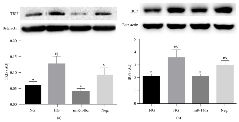 Changes of MyD88-independent signaling, TRIF and IRF3 levels, in REC. REC were cultured in normal glucose (5 mM, NG) or high glucose (25 mM, HG). Overexpression of miR-146a decreased the levels of TRIF (a) and IRF3 (b) in REC, compared to that of control HG group. A representative blot is shown. # p