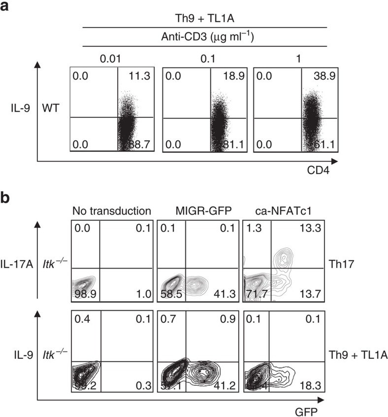 IL-9 expression correlates with strength of TCR signals. ( a ) Sorted naive WT CD4 + T cells were differentiated under Th9 conditions plus TL1A with 0.01, 0.1 or 1 μg ml −1 of anti-CD3, then restimulated with PMA and Ionomycin and IL-9 production analysed by intracellular staining. ( b ) Itk-deficient CD4 + T cells were transduced with retroviruses expressing constitutively active NFATc1 (ca-NFATc1), or a control (MIGR), differentiated under Th9 plus TL1A or Th17 conditions, and cytokine production determined by intracellular staining after PMA and ionomycin restimulation. Results in a and b are from one representative of three independent experiments.