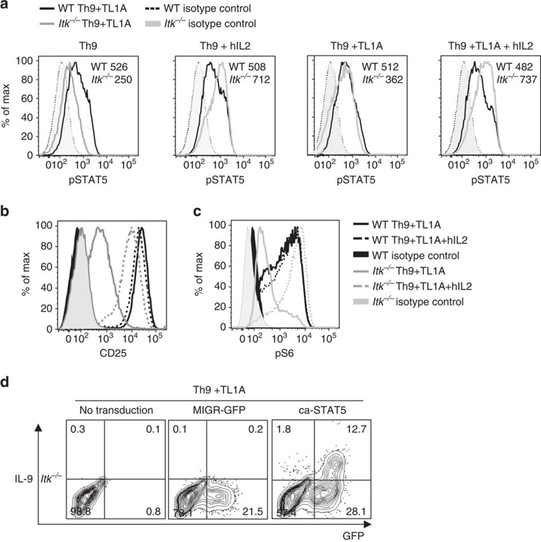 IL-2 rescues pSTAT5 and pS6 in Itk −/− CD4 T cells. ( a - c ) Sorted naive CD4 + T cells from WT and Itk −/− mice were differentiated for 3 days under Th9 or Th9 plus TL1A conditions in absence or presence of blocking anti-IL-2 plus hIL-2 and analysed for pSTAT5 (MFI are indicated) ( a ) CD25 ( b ) and pS6 ( c ). ( d ) Itk-deficient CD4 + T cells were transduced with control (MIGR) or constitutively active STAT5-expressing retroviruses, differentiated under Th9 plus TL1A conditions and IL-9 production determined by intracellular staining after PMA and Ionomycin restimulation. Results in a - d are representative of one out of at least 3 experiments.